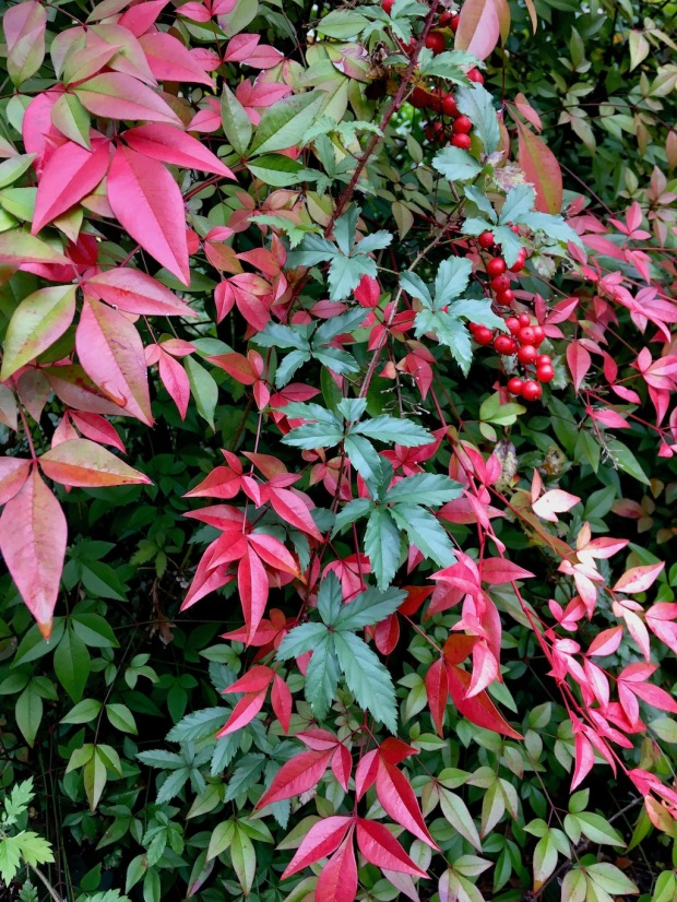 Green leaves, coloured bright red in places
