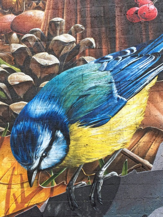 Painting of blue with blue back and yellow belly
