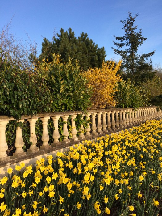 Blue sky, stone balustrade and daffodils