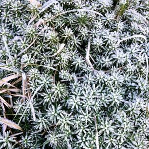 Close up of frozen vegetation