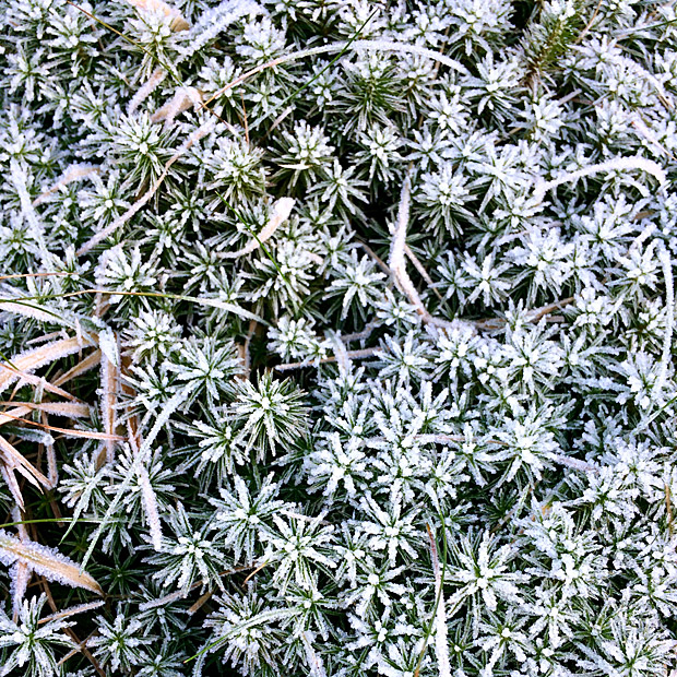 Close up of frozen vegetation