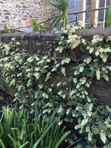 Flowering plant growing along a low wall