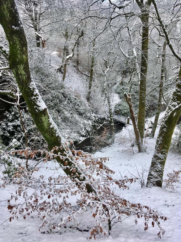 View down through trees in a snowy park to a bridge