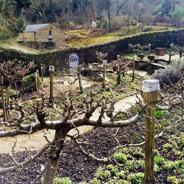 A walled garden on a slope with trained fruit trees