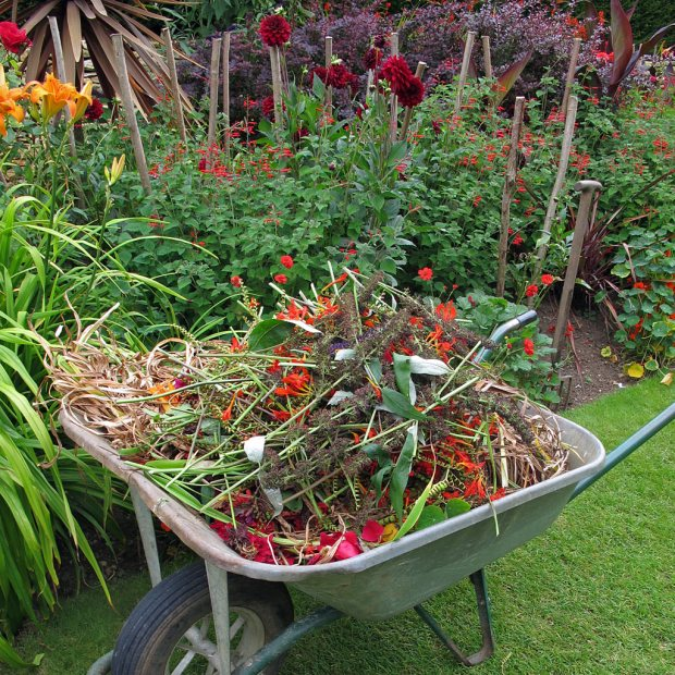 Foliage and flowers heaped in a wheelbarrow in a flower border