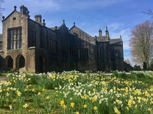 Yellow and cream daffodils in Houghton Tower's garden