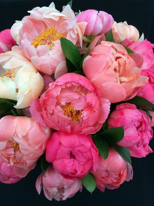 A large flower bouquet made from 'Coral Sunset' peonies