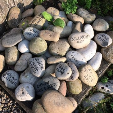 Pile of pebbles, some pained with plant names