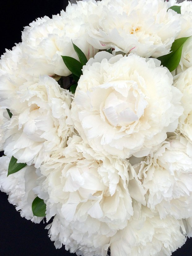 Close up of double peonies