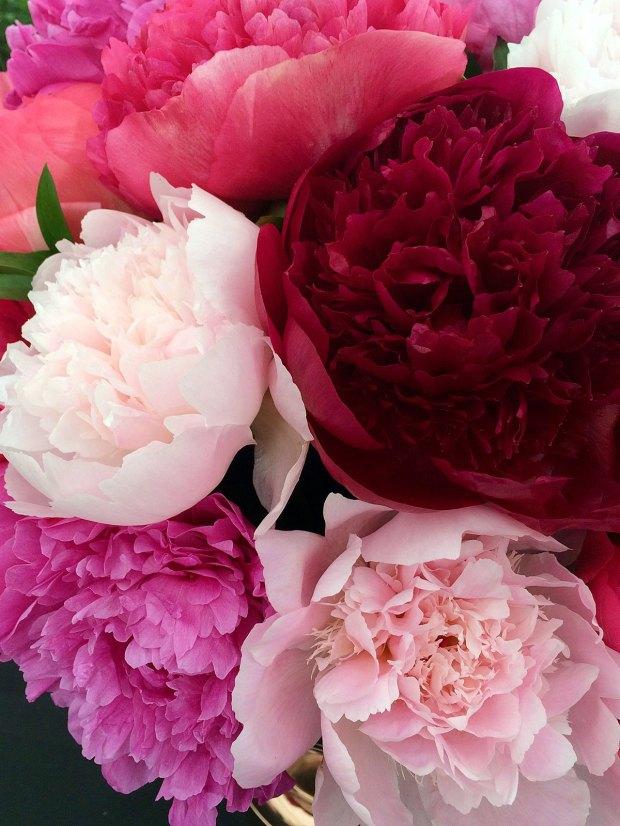Pile of peony flowers