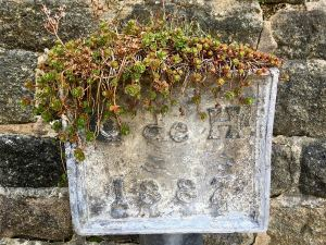 Succulents growing on top of an old wall plaque