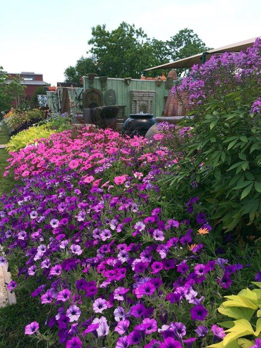 Colourful bank of petunias and annuals