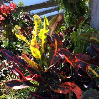 Foliage in sunlight