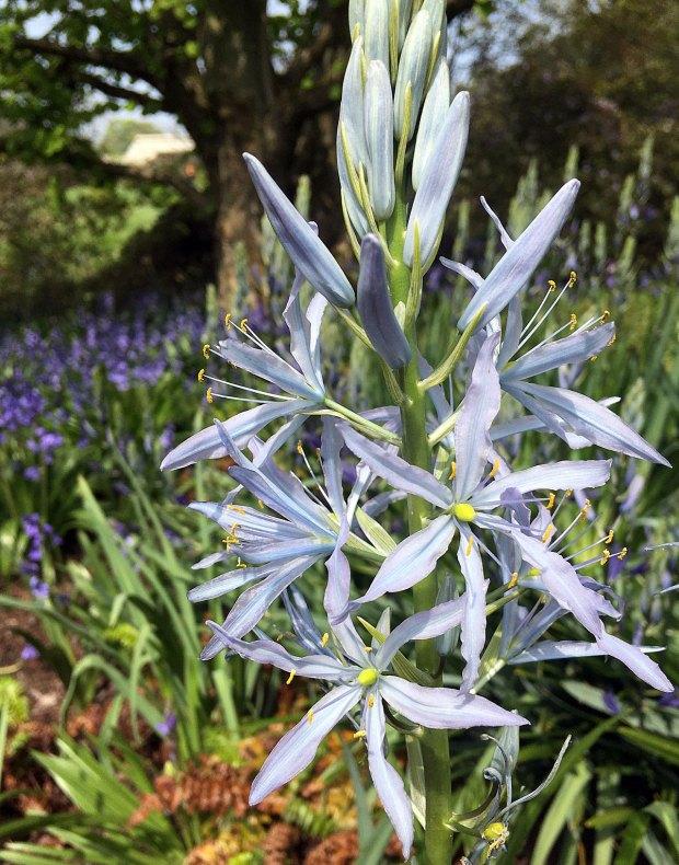 Spike of pale blue flowers