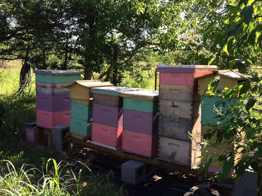 Beehives painted pink, yellow, purple and turquoise