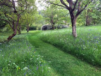 Wildflowers in grass with a path mown through