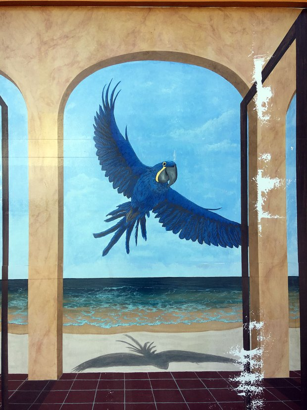 Blue parrot and its shadow seen through an arch | Key West street art