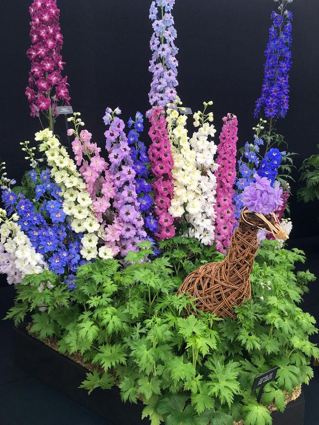 Wicker peacock with tail made from pink, blue and cream delphiniums