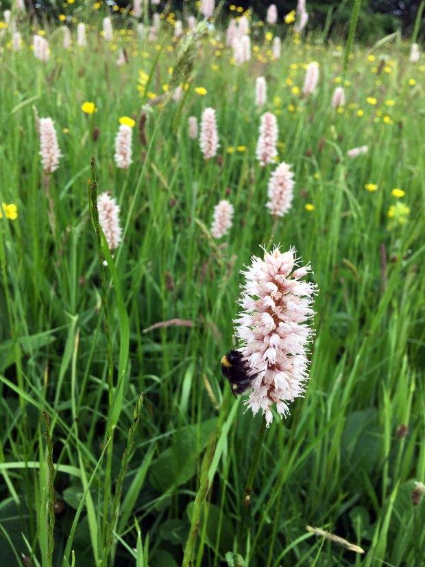 Grassland flowers