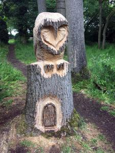Owl carved in a tree by Angel Maltby