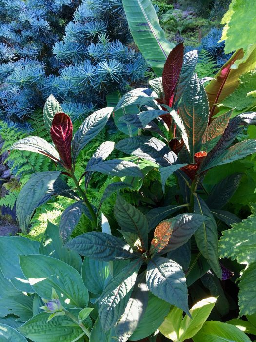 Contrasting foliage in shades of green and blue