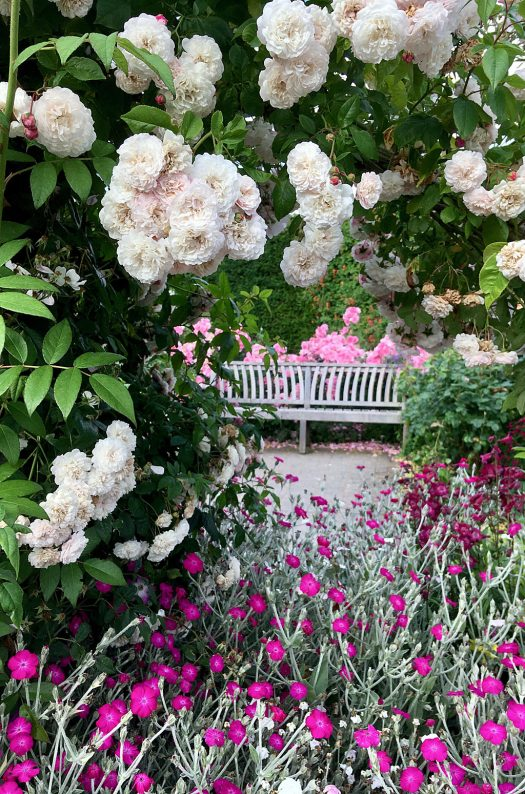 Roses and perennials frame a bench at RHS Rosemoor Garden