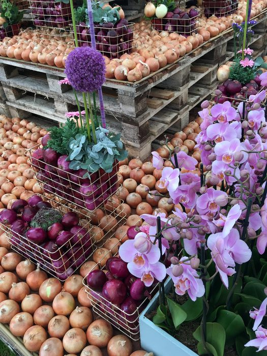 Display of onions and orchids at the Southport Flower Show