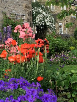 Flower garden with geraniums