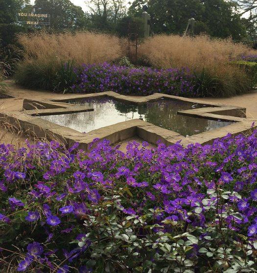 Geraniums with tall grass by a pond at Jupiter Artlands