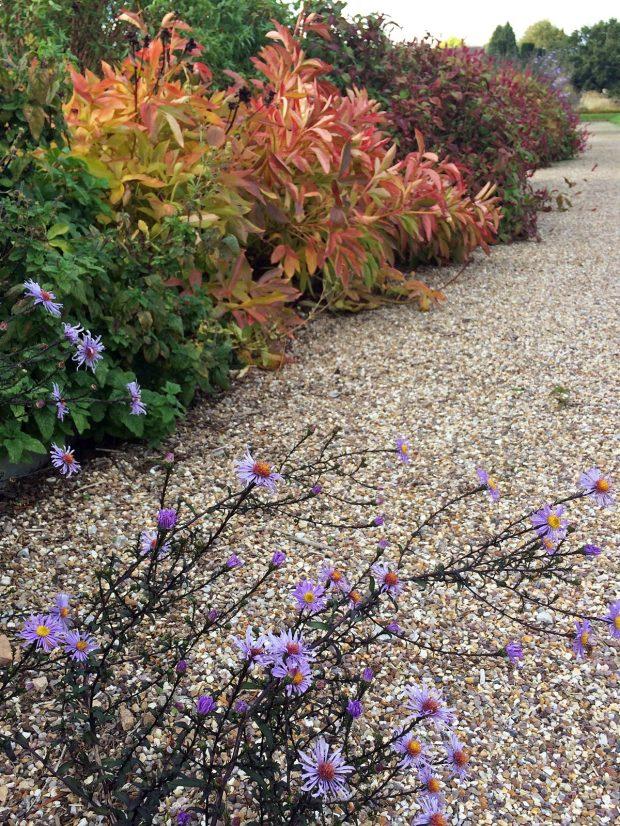 A rabbit's eye view of an autumn border at Trentham Gardens