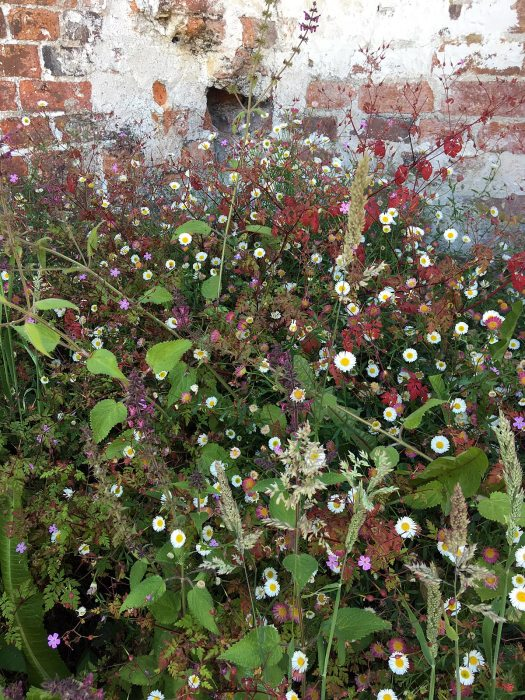 A tangle of wild flowers against a brick wall