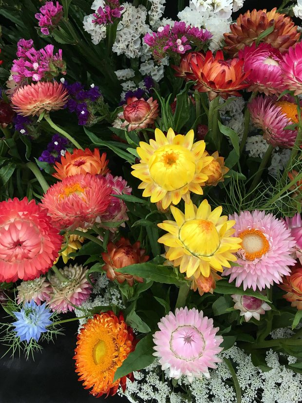 Colourful everlasting flowers