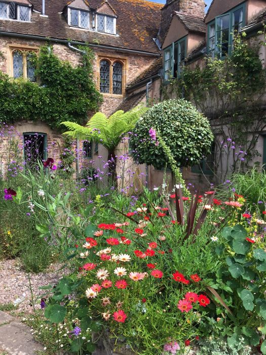 Topiary, tree fern and summer flowers in Cothay Manor's courtyard garden