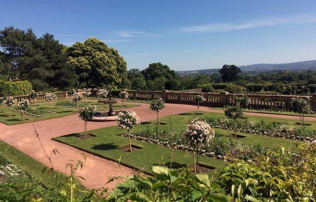 White standard roses at Hestercombe Garden