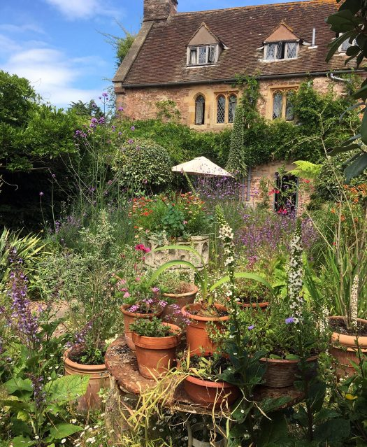 Table of potted plants in Cothay Manor's courtyard garden