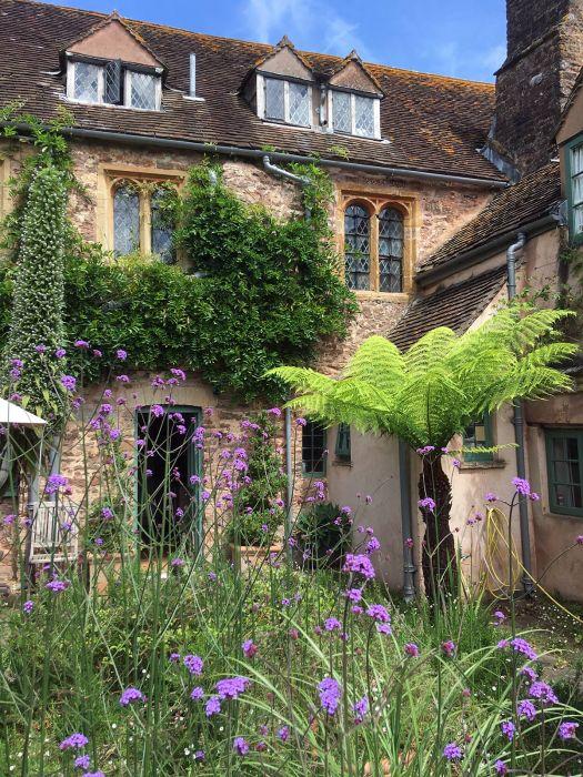 Verbena bonariensis at Cothay Manor