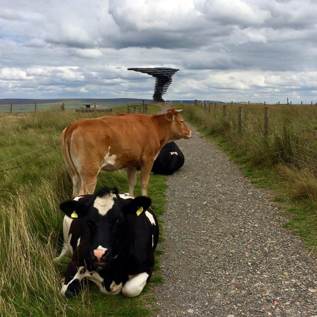 Wind sculpture with cows guarding the path