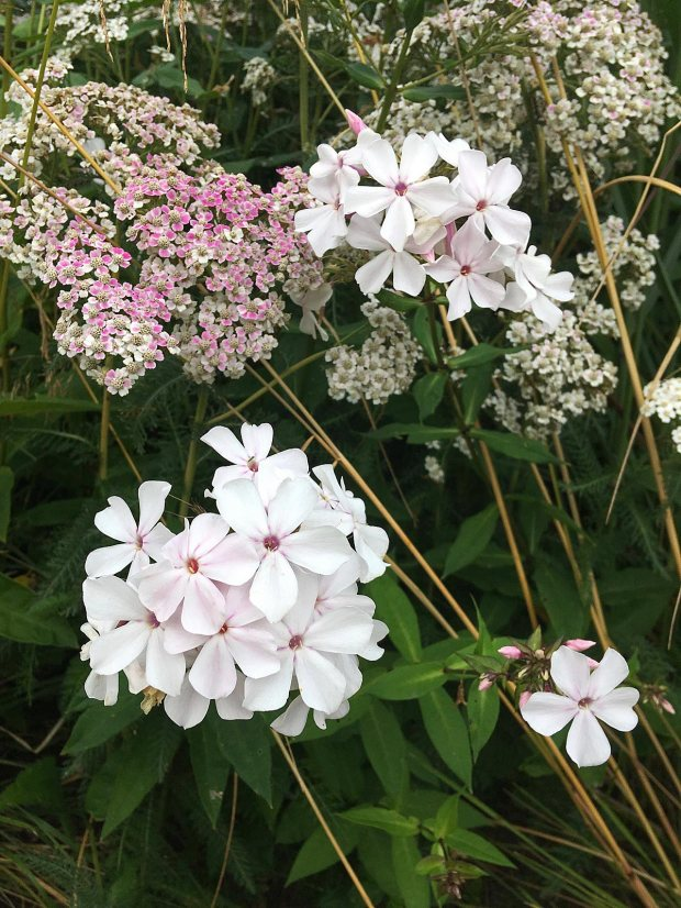 Plant combinations: White Phlox and Achillea