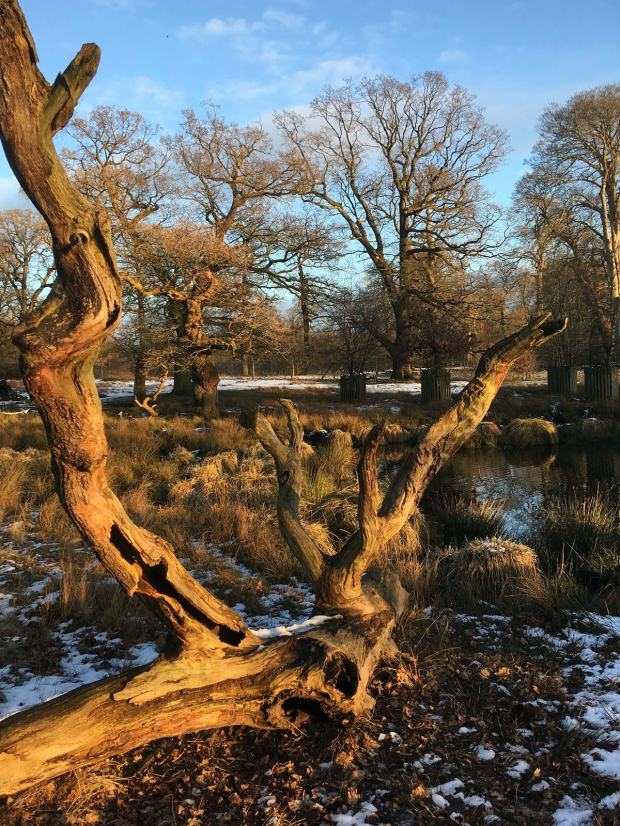 Tree snag
