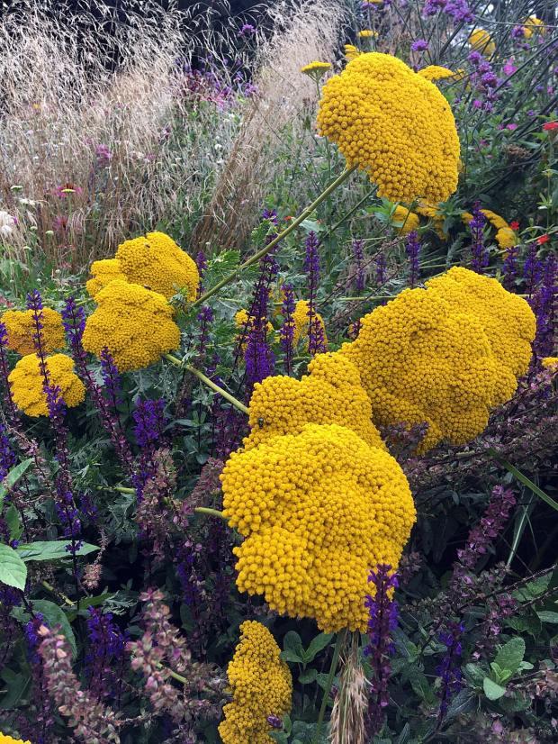 Plant combinations: Achillea filipendulina with grasses and perennials