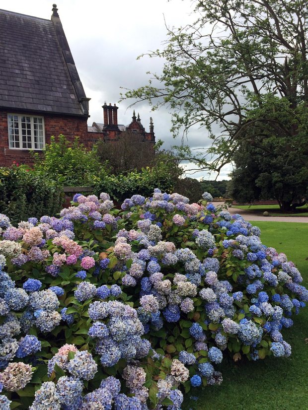 Arley Hall hydrangeas