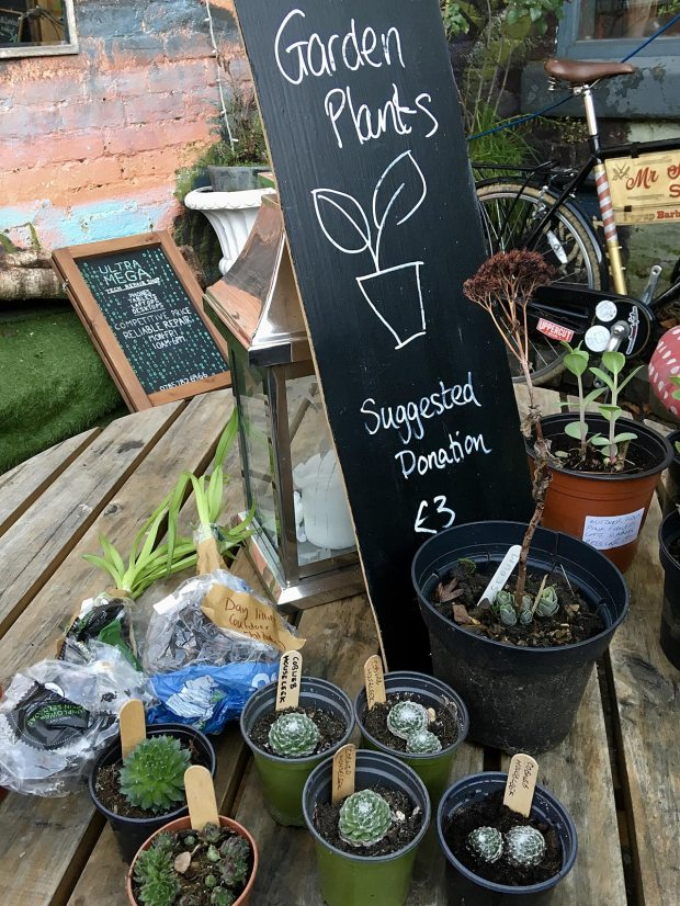 Garden Plants - Suggested donation £3