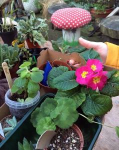 Tray of plants at Sheffield PlantSwap