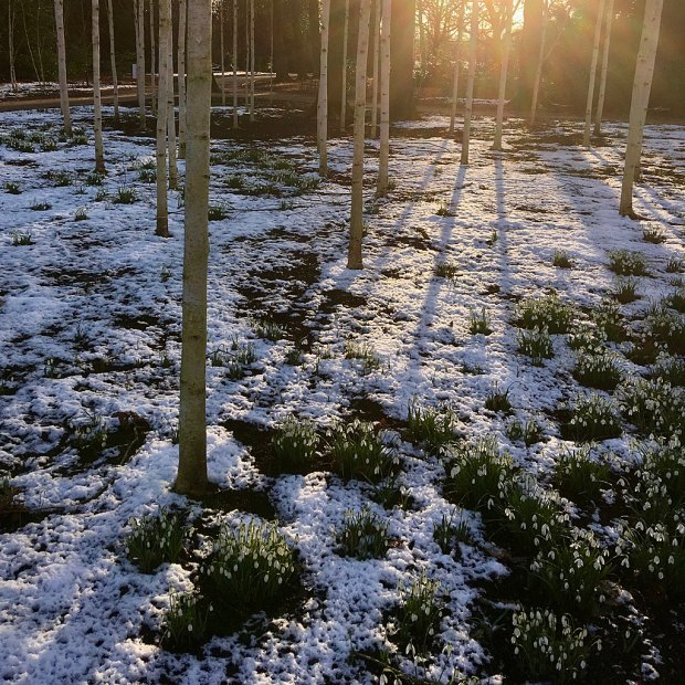 Snowy landscape with snowdrops backlit by the fading sun