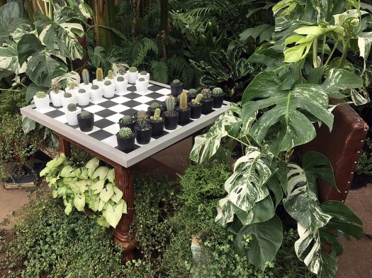 Chessboard with cactus playing pieces