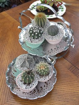 Cactus cupcakes on a silver cake tray