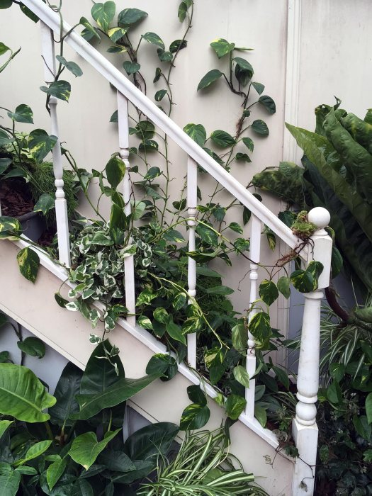 Staircase with white bannister and trailing vines