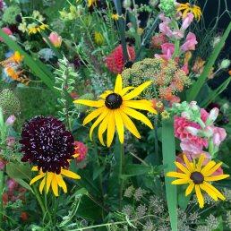British-grown flowers by Petal & Twig