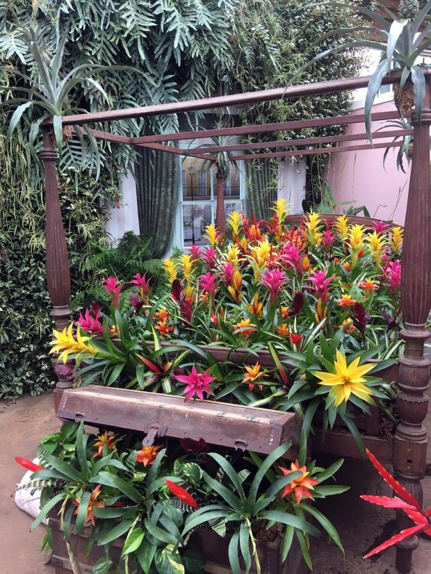 Four-poster bed with colourful flowering bromeliads