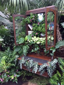 Book cabinet full of plants at the Giant Houseplant Takeover